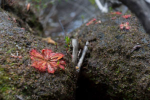 Plants in the wild: Royal National Park