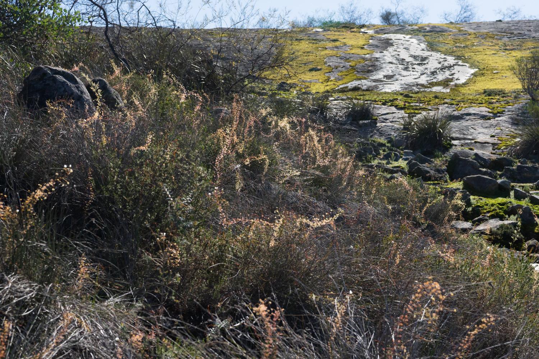 WA 2019: Part 8. The Perth Hills