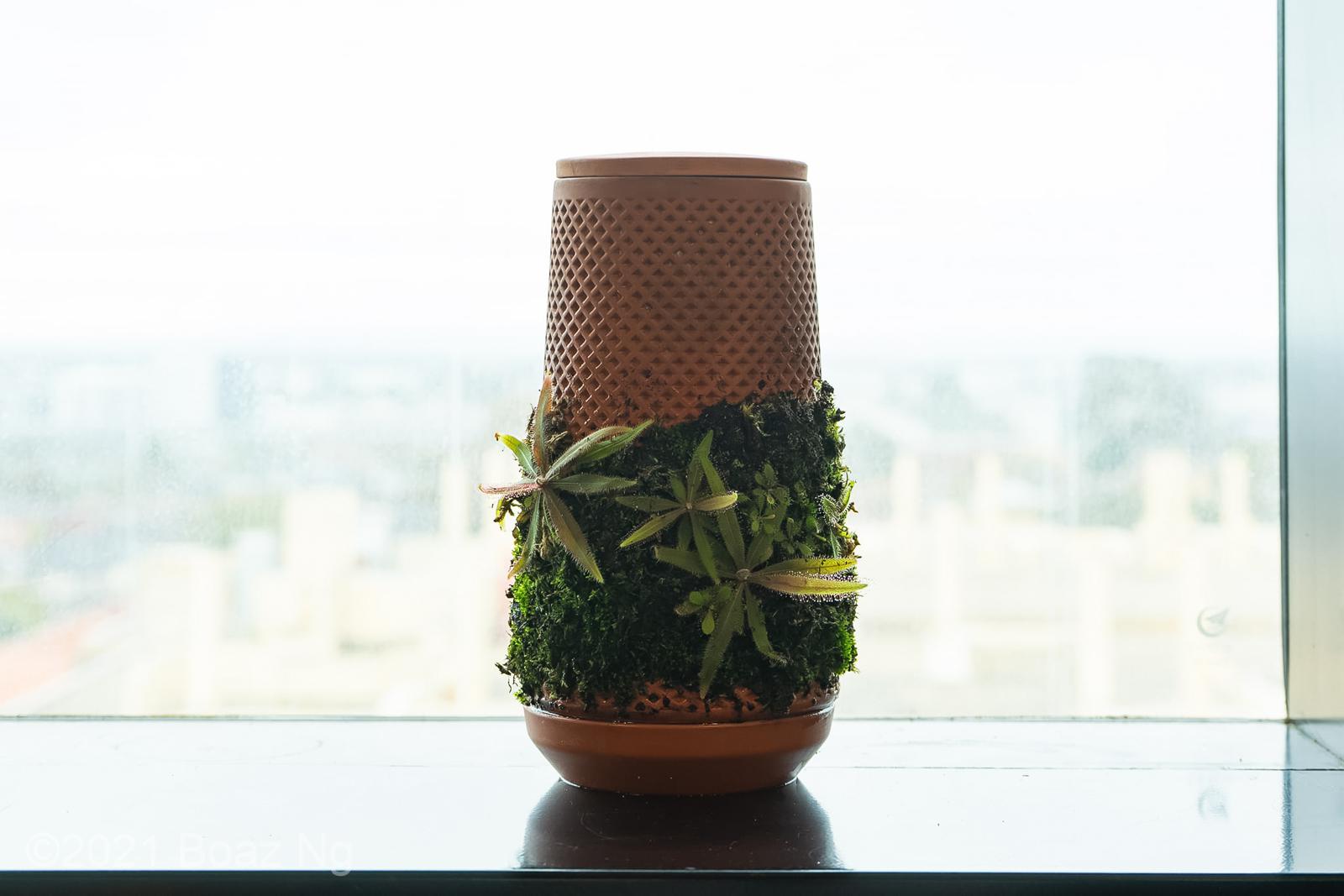 Terracotta Seepage Planter